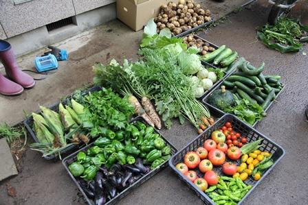 たっぷりとれた野菜たち