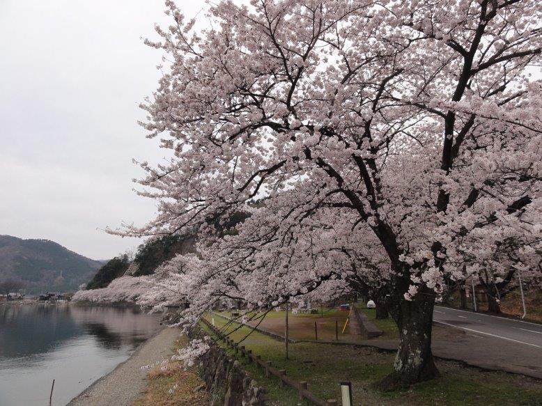 桜230%DSC04379
