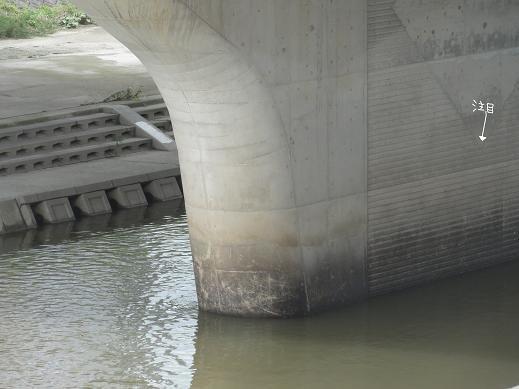 ①普段の天の川20%DSC00702