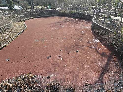 真っ赤に染まった池(花の文化園のひょうたん池)