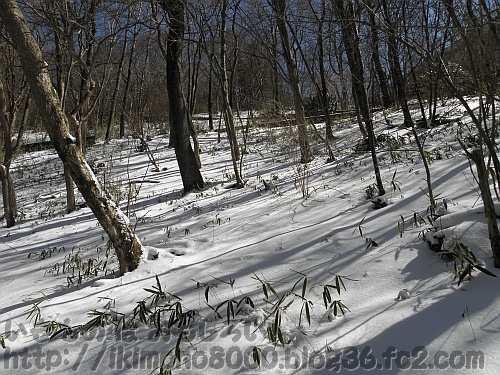 3月の雪が積もったちはや園地