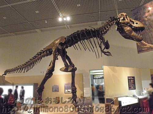 こちらもほぼ全周から見ることができるティラノサウルス