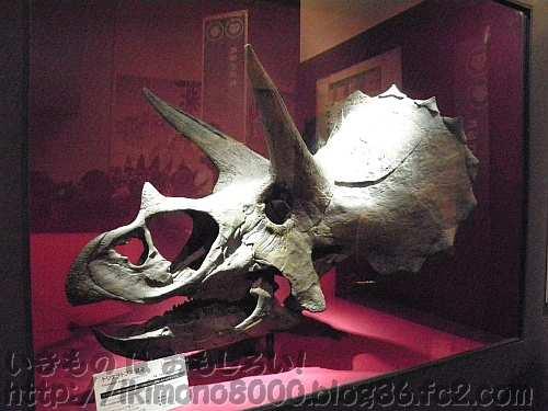 会場入り口で出迎えてくれるトリケラトプスの128cmの大きな頭