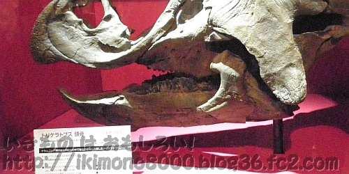 トリケラトプスの顎