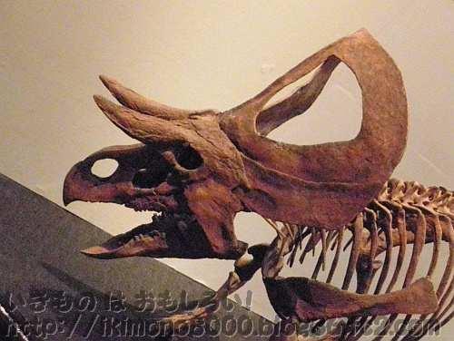 ララミディア大陸最初のケラトプシア類のズニケラトプス