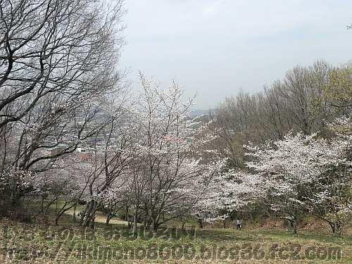 桜の向こうに町が見える緑の広場