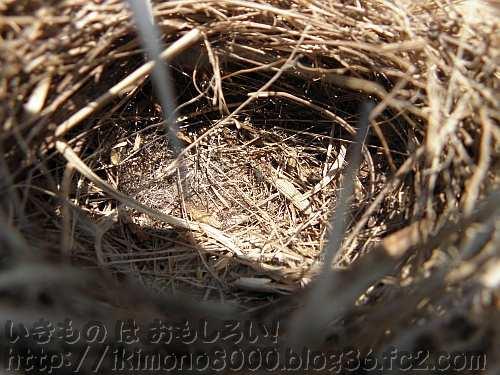 巣の中は細くて柔らかそうな葉が使われています