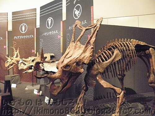 ずらっと並んだトリケラトプスの親戚たち