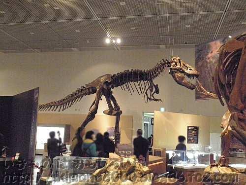 トリケラトプスを見ているティラノサウルス