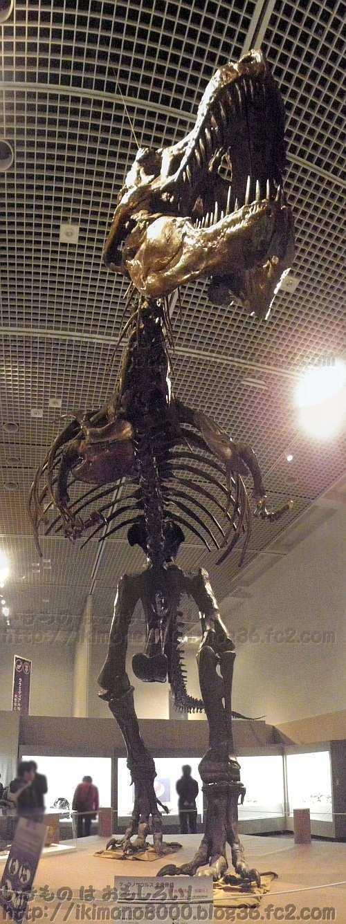 でっかいティラノサウルスを見上げる!