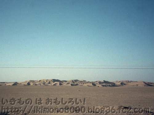 タクラマカン砂漠の砂丘