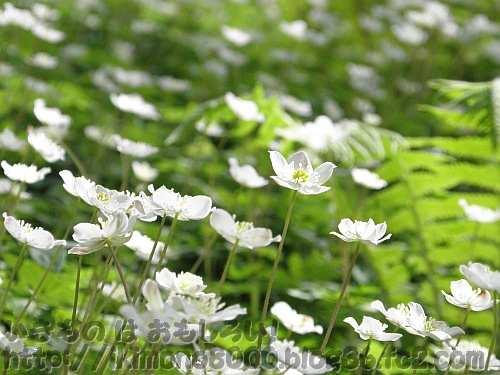 花が光を集めるように伸び上がる