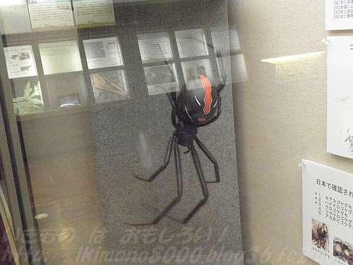 超巨大毒グモのセアカゴケグモ?
