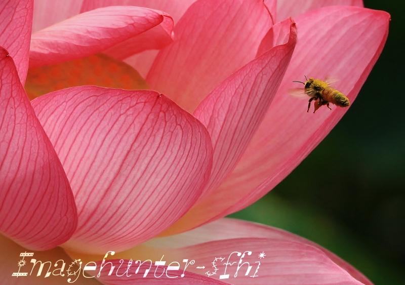 大きな花FC2 (800x563)