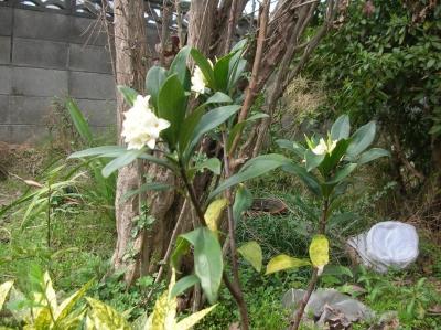 なんて名前の木の花?