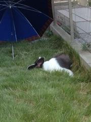 立ち耳5ウサギみたい