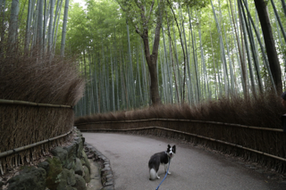 竹林散策2