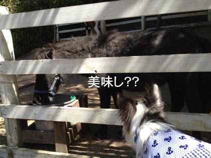 お馬さんにも会いました