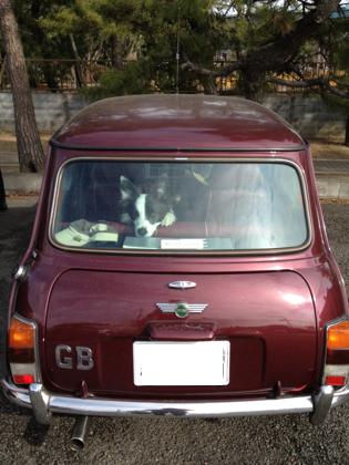 mini12.jpg