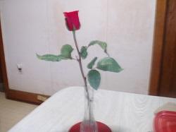 5 Rose 1