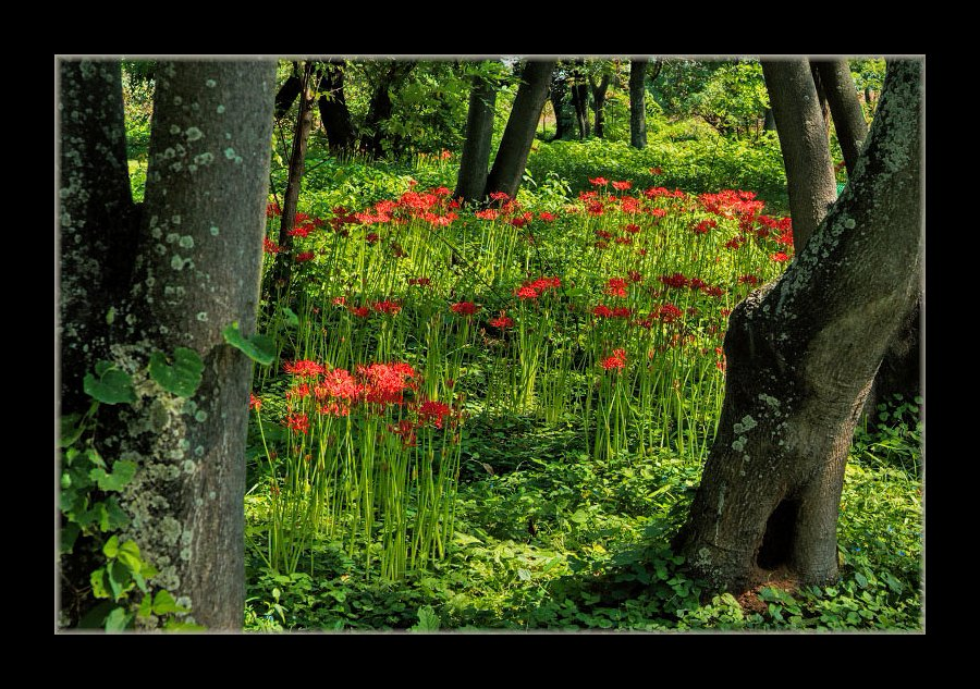 林の中に彼岸花