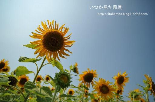 DS7_0294i-ss.jpg