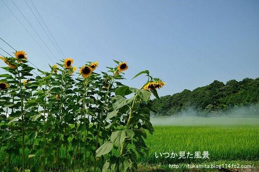 DS7_0404ri-ss.jpg
