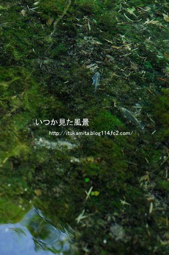 DS7_0507ri-ss.jpg