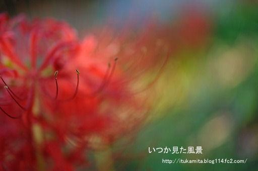 DS7_0901ri-ss.jpg