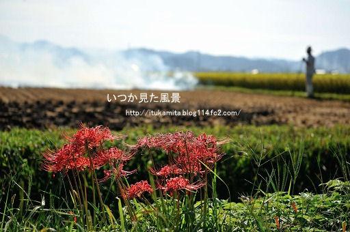 DS7_0911ri-ss.jpg