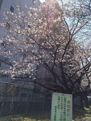 桜20140324