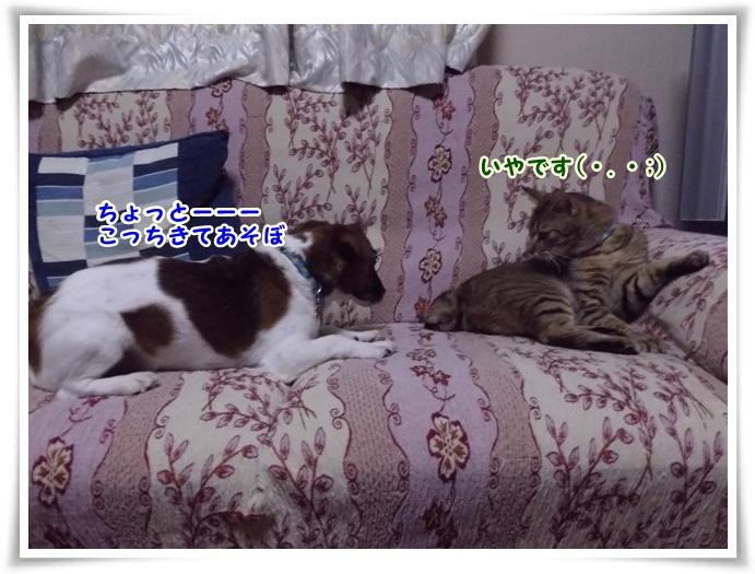 IMGP3217.jpg