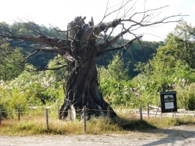 るろうに剣心の木