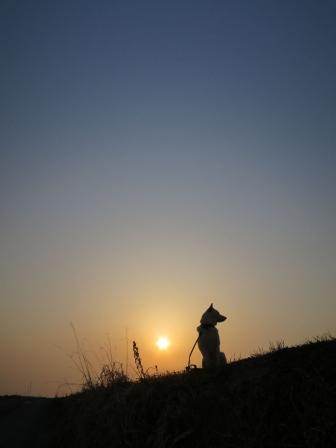 太陽が面白いカタチ