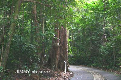 04-ブキティマ自然保護区046