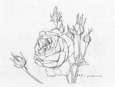 01-バラ白黒20140228
