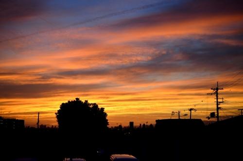 夕陽1004