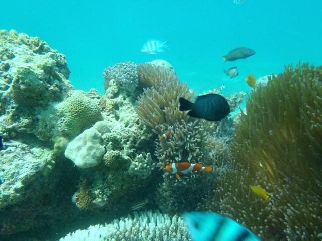 セブの海中2