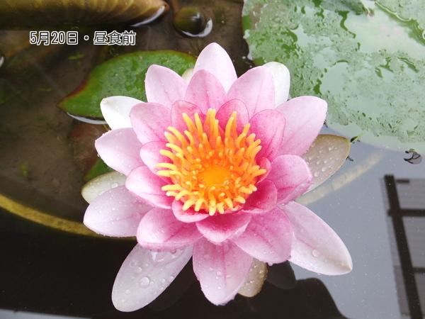 yuxoHipjFeS9jBA1400581313_1400581368.jpg
