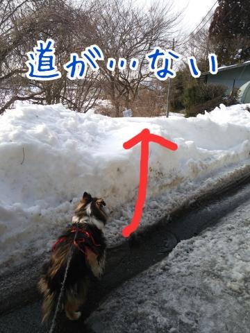 2014-02-24-17-52-25_deco.jpg