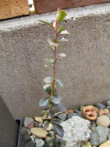 2014年 謎の植物全体