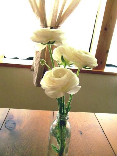 ラナンキュラス 切り花