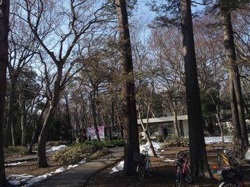 神代植物園1