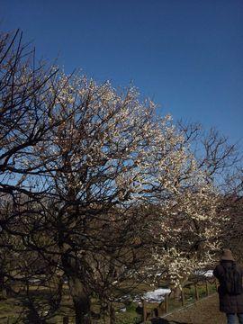 神代植物園2