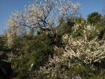 神代植物園4