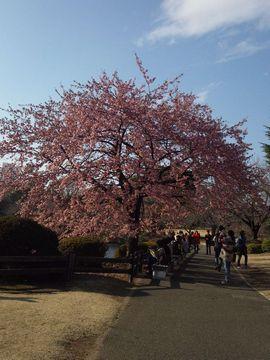 新宿御苑6
