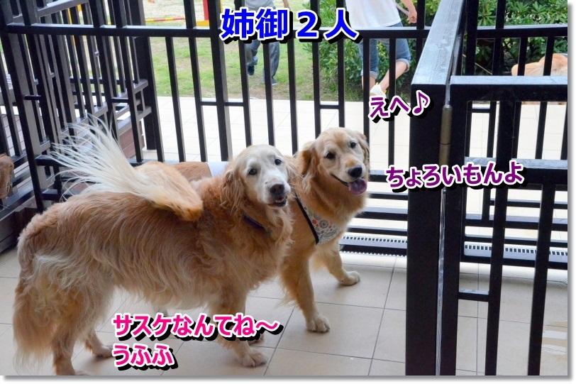 DSC_0479姉御