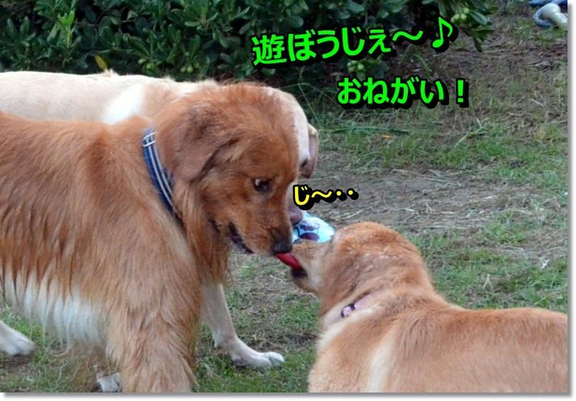DSC_0159_20140916100514861.jpg