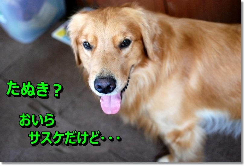 DSC_0305_20141005213154020.jpg