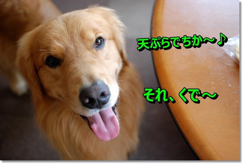 DSC_0313_20141005213158ba8.jpg